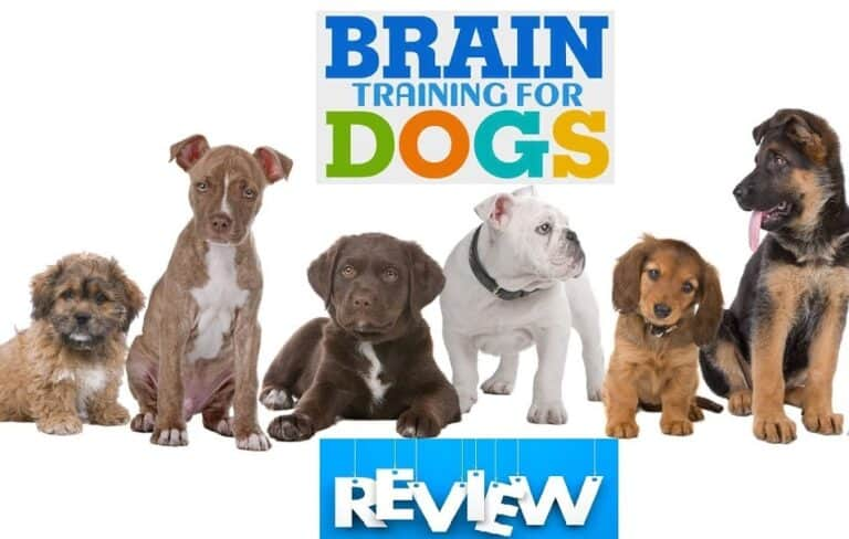 brain training 4 dogs review