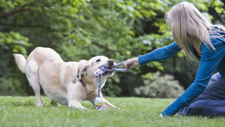 brain training 4 dogs